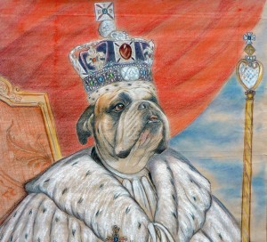 Estudio de Bulldog coronado