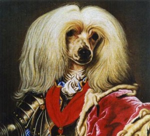 Cefer, portrait of Chinese Crested Powderpuff